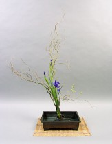 KurosakiR04182008