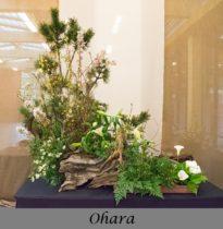 Ohara School Arrangement